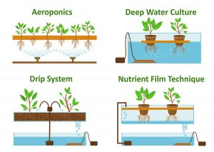 Different method of Deepwater hydroponics