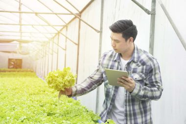 Guide The Best Hydroponic Systems