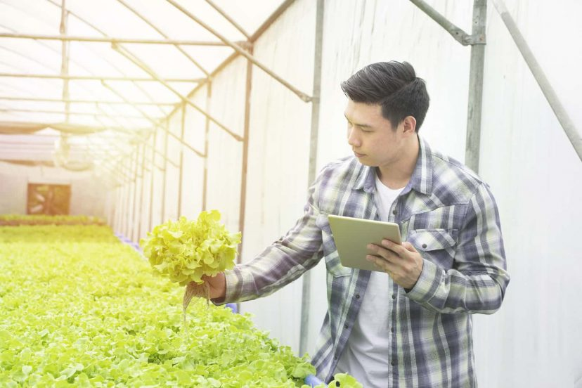Guide For Choosing The Best Hydroponic Systems
