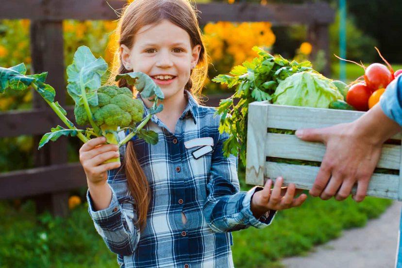 How To Establish An Organic Garden?