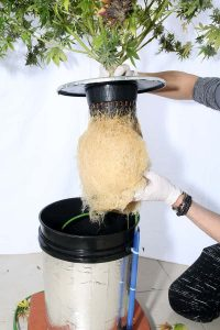 How to develop the best hydroponic system