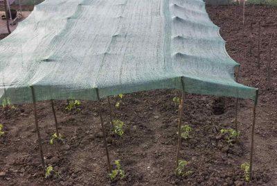 Shade Cloth For Vegetable Garden