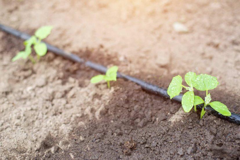 Rock Your Vegetable Garden Through The Drip Irrigation System