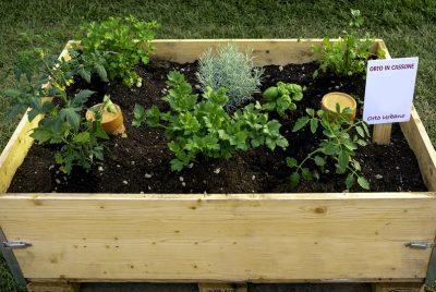 Vegetabl Terrace Garden