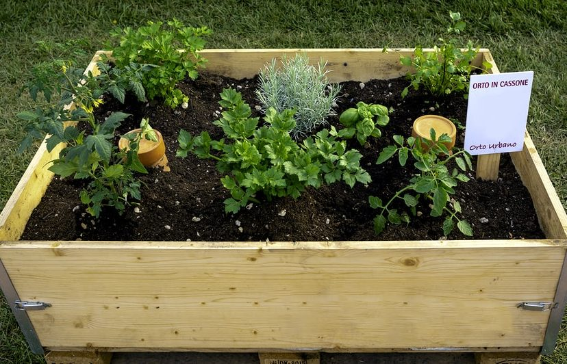 Vegetable Terrace Garden: An Amazing Approach To Have Organic Vegetables