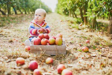 Apple Crates Vegetable Garden