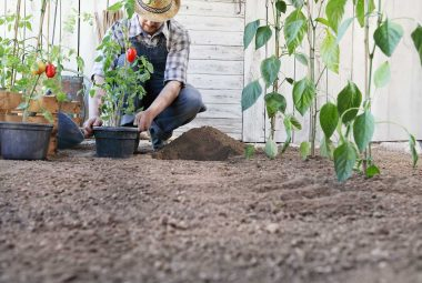 Garden Spacing For Vegetables