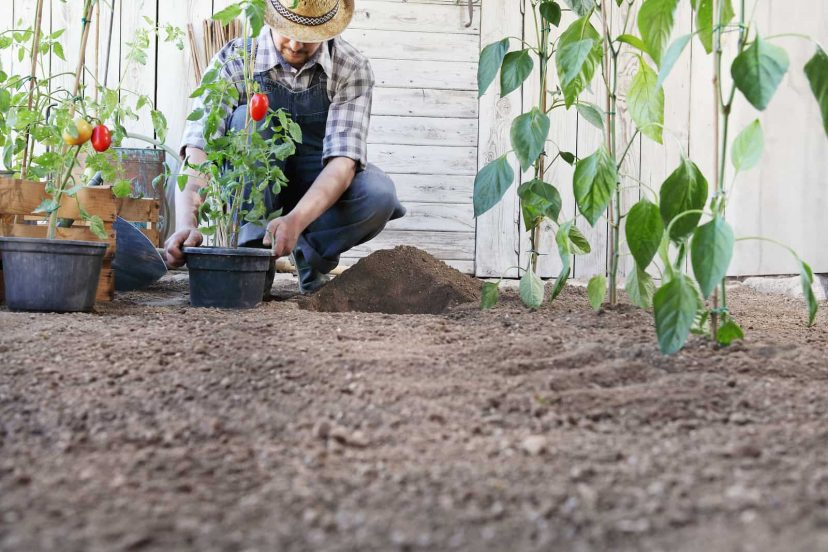 A Guide To Plant Spacing In The Vegetable Garden