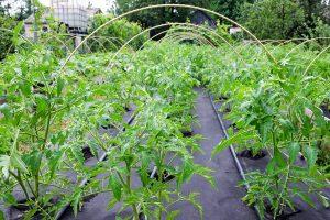inorganic barrier for weeds in the vegetable garden-min