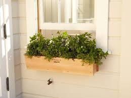Window box wall vegetable garden