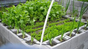 Cinder block vertical vegetable garden