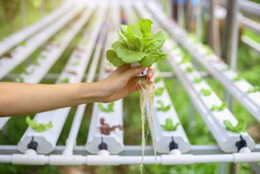 All About Hydroponic System