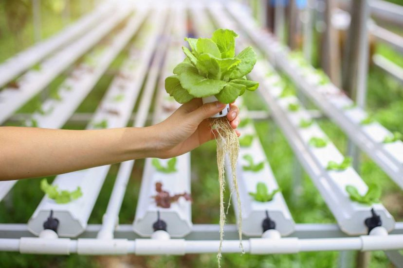 A Brief Overview: All About Hydroponic System