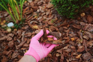 Cedar Mulch For Vegetable Garden