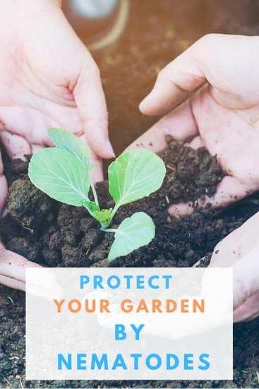 Nematodes protection for garden