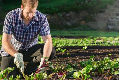 Steps To Create A Veggie Patch