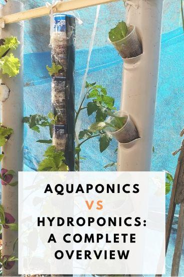 Aquaponics vs Hydroponics which is better