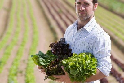 Is It Right Time To Harvest Leaf Lettuce