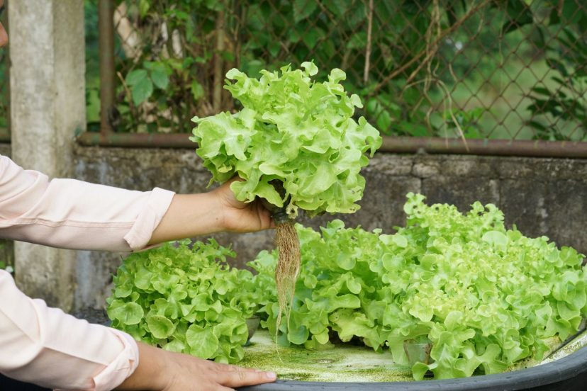 An Overview: What Is Aquaponics?
