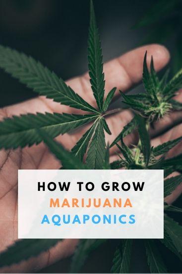 Marijuana Aquaponics How To Grow - PIN