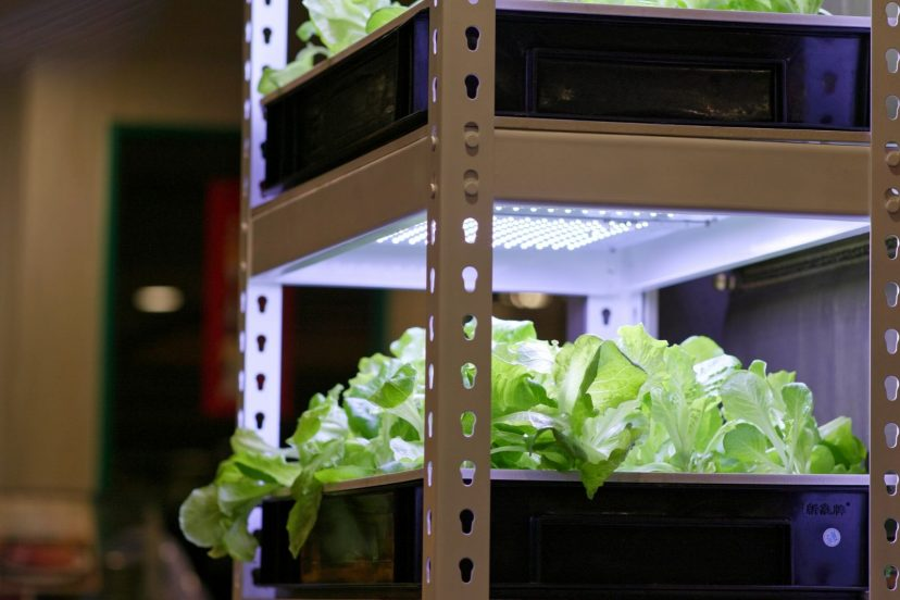 How To Make An Indoor Aquaponics System?