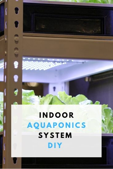 How To Make Indoor Aquaponics system- PIN