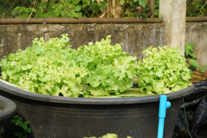 How To Make The Best Aquaponics Grow Bed?