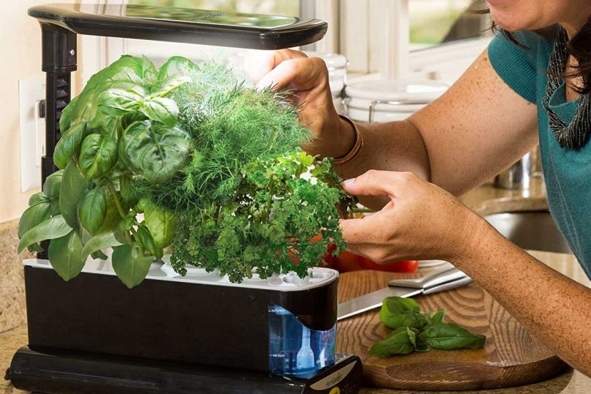 Aerogarden Sprout Led Hydroponic Review