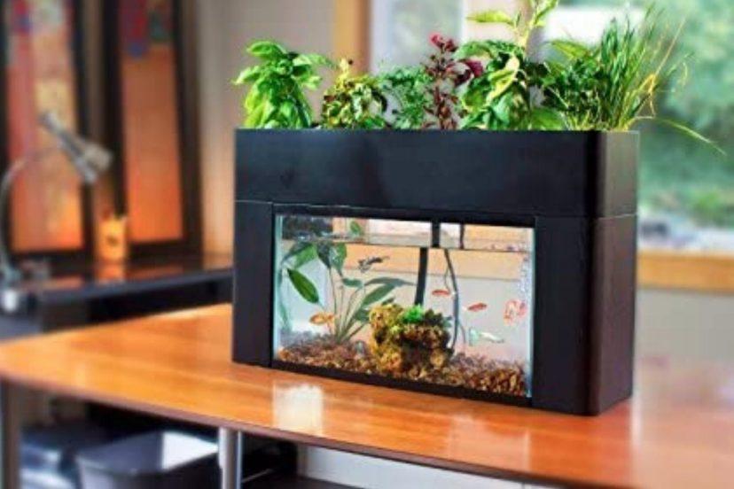 AquaSprouts Garden Review