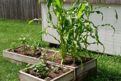 Best Raised Planter Boxes