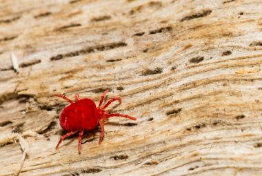 Does Spider Mites Bite Human