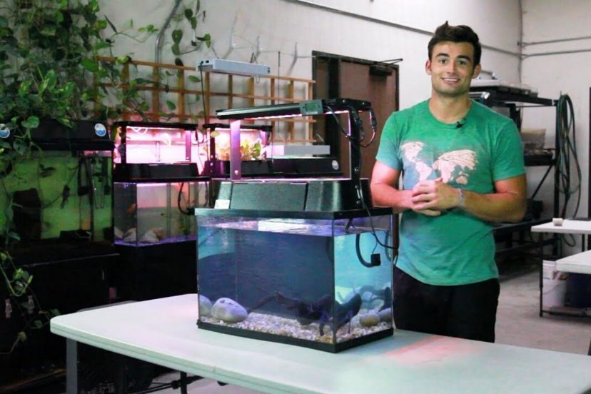 EcoLife Eco-Cycle Aquaponics Indoor Garden System With LED Review