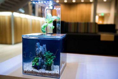 EcoQube C Aquaponics Aquarium Review