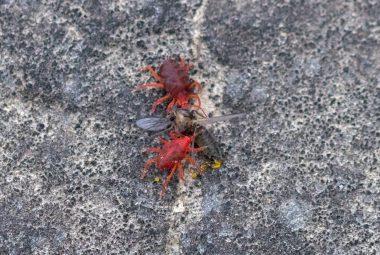 Top 10 Best Spider Mite Killers