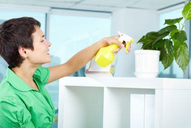 Top 3 (Best) Organic Spider Mite Spray