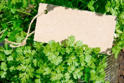 Buy Chervil (French Parsley) Seeds