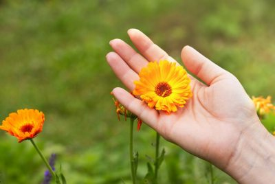 Buy Marigold Seeds 100% Organic