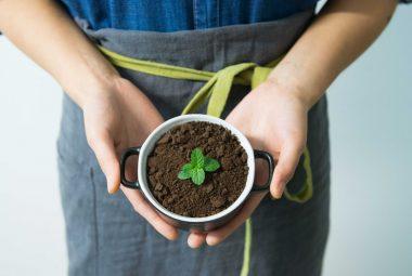 Buy Mint Seeds 100% Organic