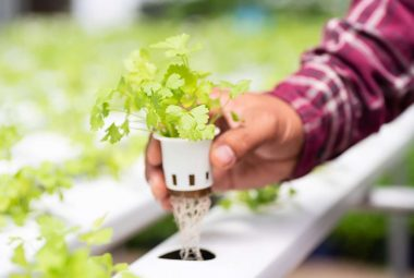 15 Easy Plants That Grows Best In Hydroponics
