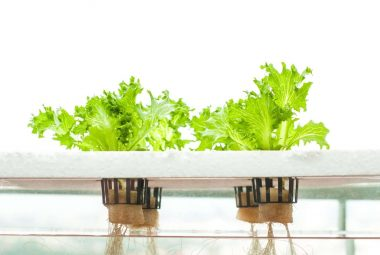 Hydroponic Plans, DIY You Can Build Easily For Your Home Garden