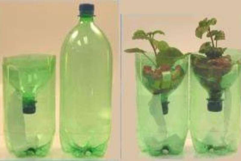 Simple Soda Bottle Hydroponic System