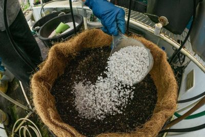 What Is Perlite, Usese Pros And Cons