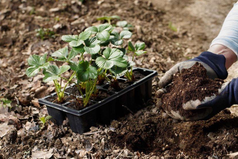 3 Top (Best) Soil Conditioner?