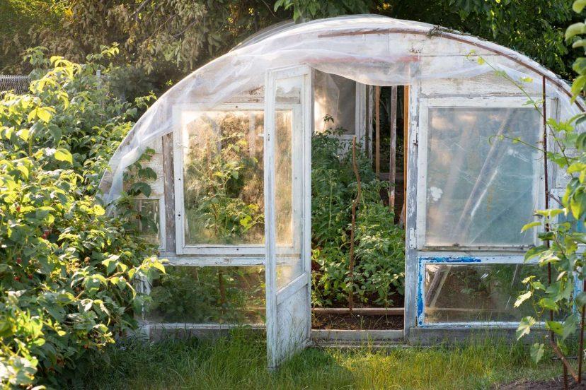 10 Best Pop Up Greenhouse Reviews