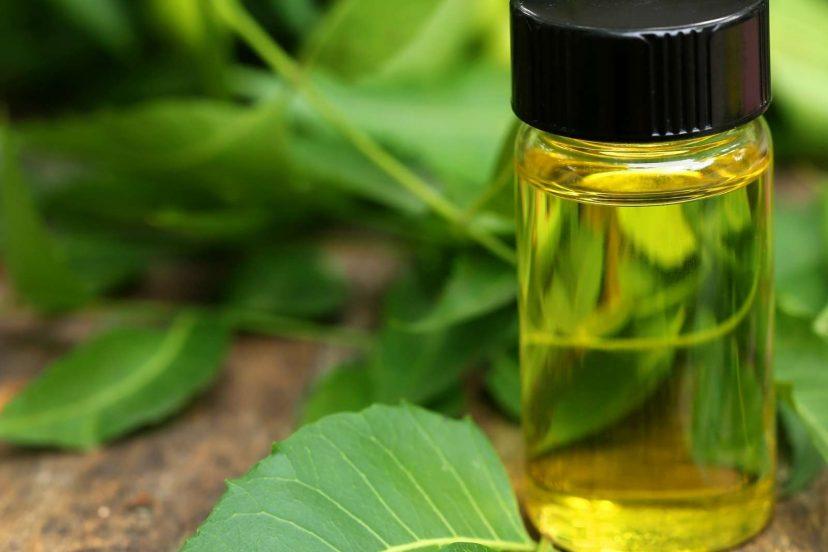 3 (Top) Best Spider Mite Neem Oil