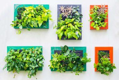 Best Indoor Vertical Garden