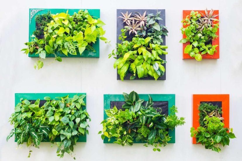 Best (TOP) 5 Indoor Vertical Garden