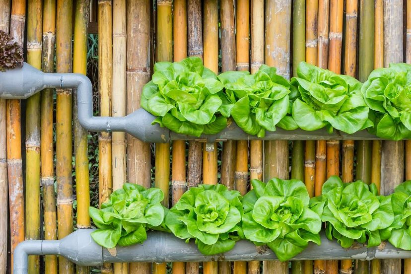 Hydroponic Garden: 10 Best Systems Review