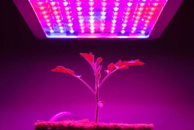 Best 300W LED Grow Light Review
