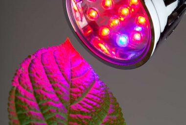 Top 6 1,000 Watt Led Grow Lights To Buy